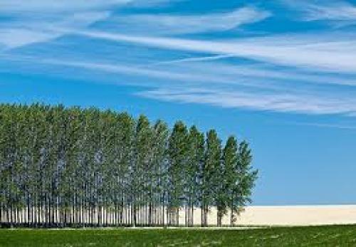 Trees Line Photograph