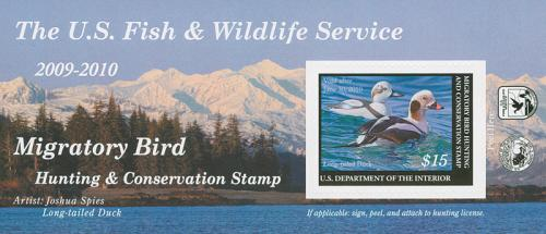 Long-Tailed Duck s/s-s/a