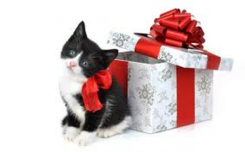 Cats Giftcards