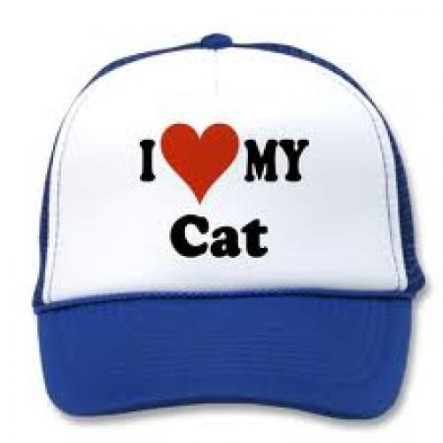 Cats Hat