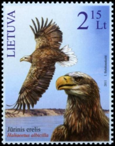 2011 sea eagle