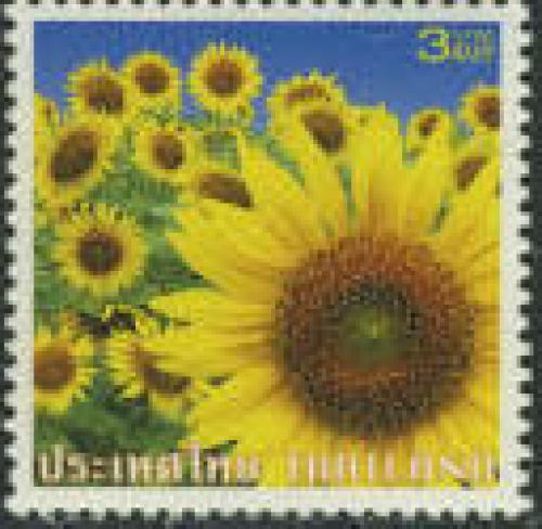 Sunflower 1v