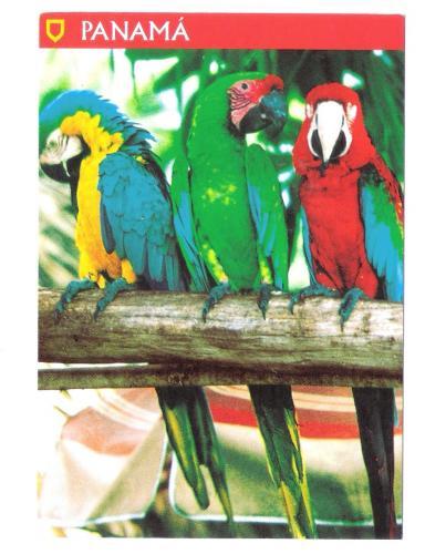 POSTCARD  PANAMA BIRD